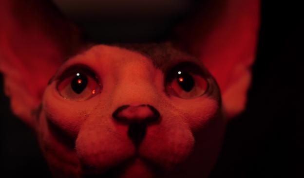 TEA proyecta una selección de videocreaciones del artista tinerfeño Carlos Rivero