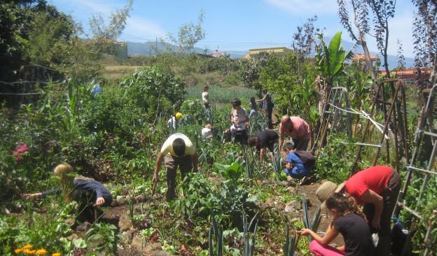 Fotonoviembre celebra la próxima semana en TEA Tenerife un taller de 'Bombas de semillas'